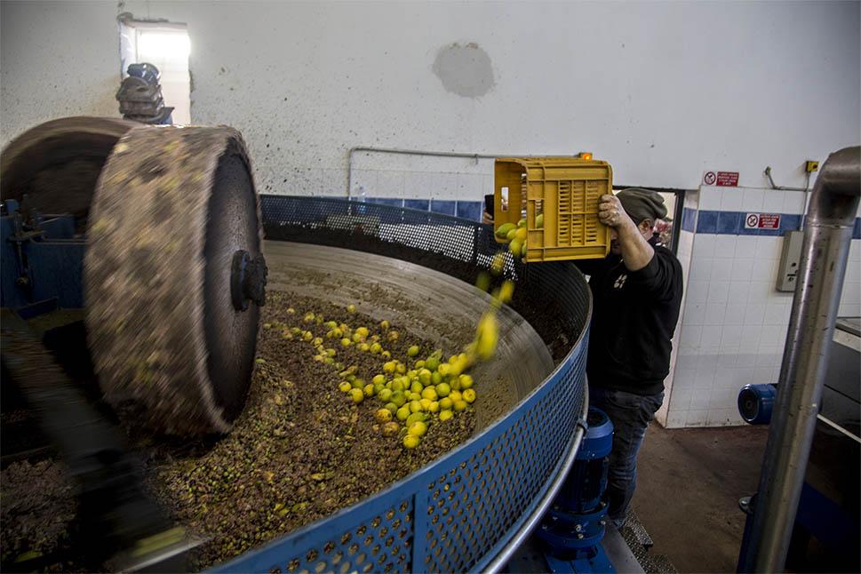sciroppo-olio-al-limone-dicembre-2015_0012_sciroppo-olio-al-limone-dicembre-2015_0012_sciroppo_olio-limone-dicembre-2015